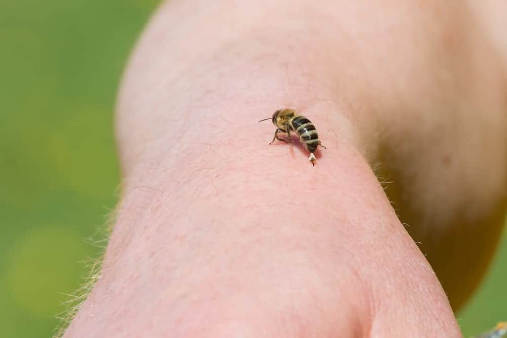 bee sitting on a person's hand